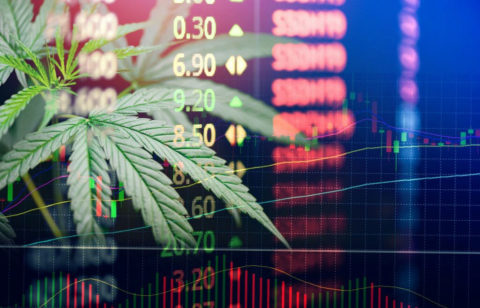 Cannabis Business Increased Profits