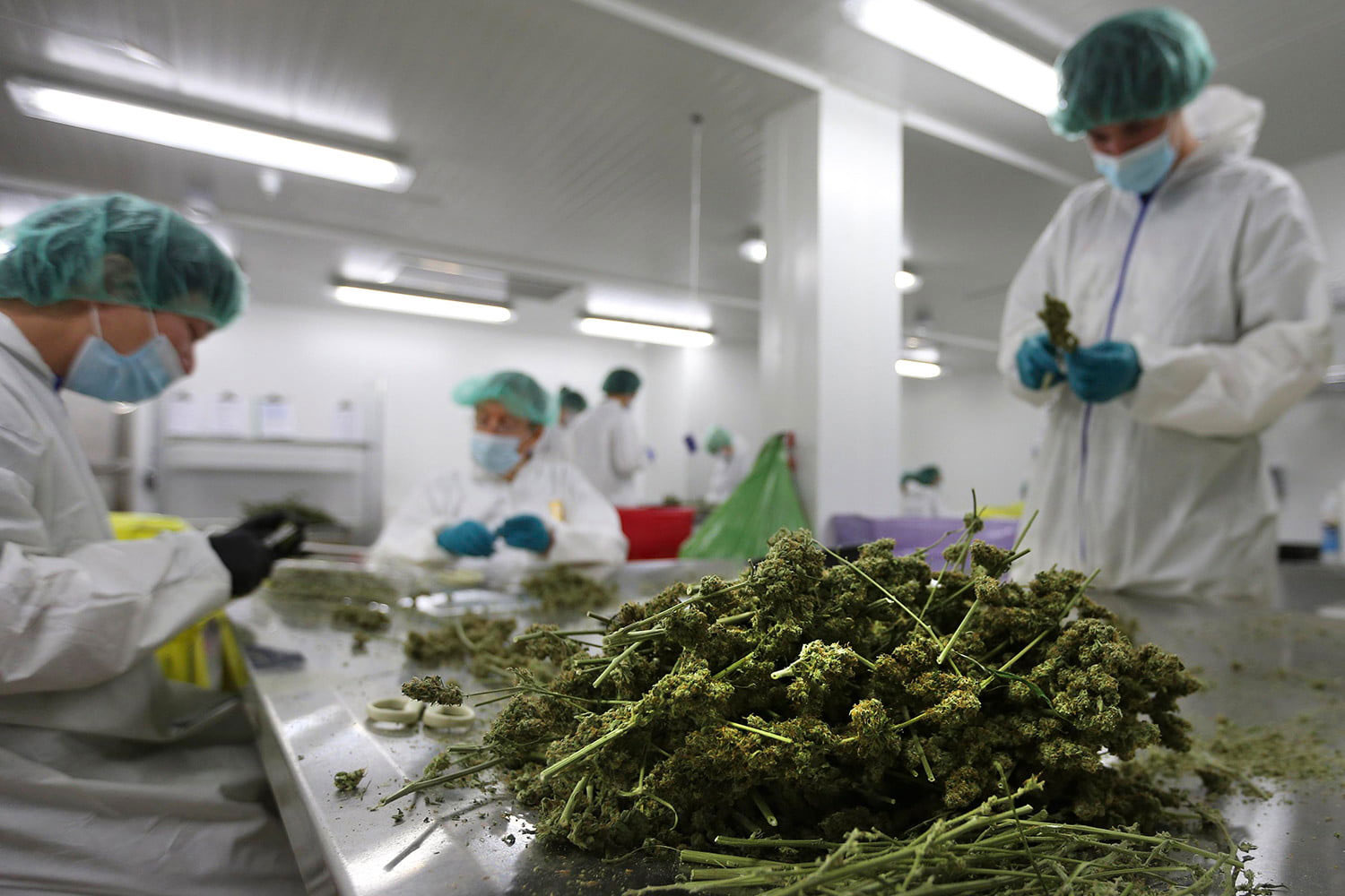 Operational Expertise for Cannabis Projects