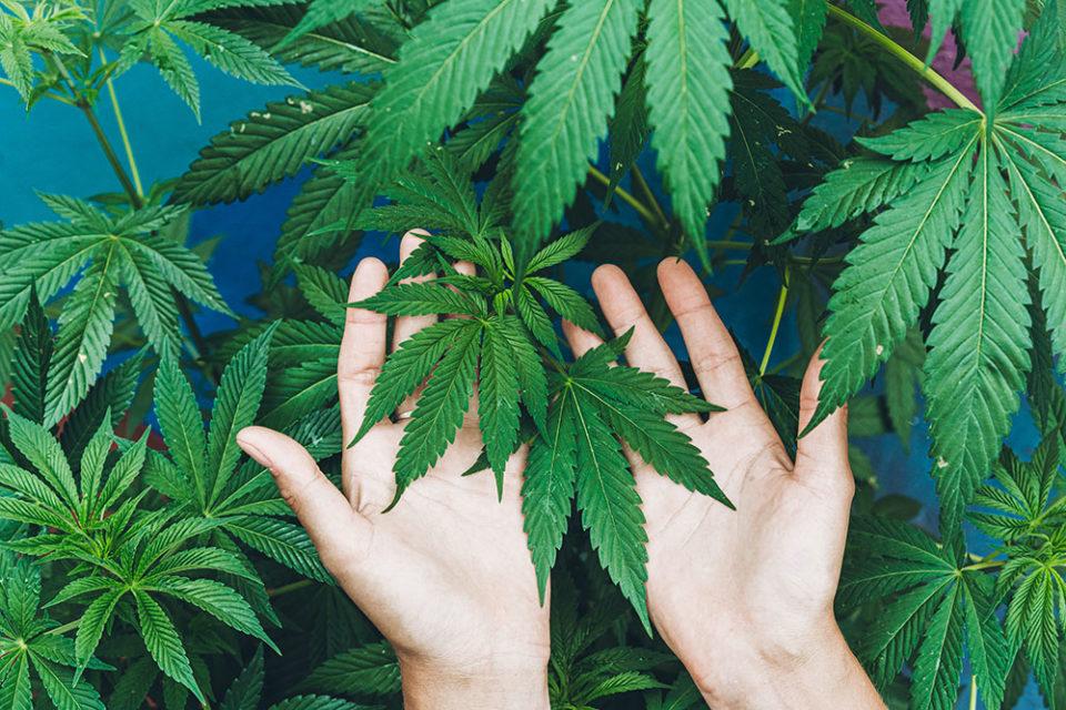 cannabis community outreach