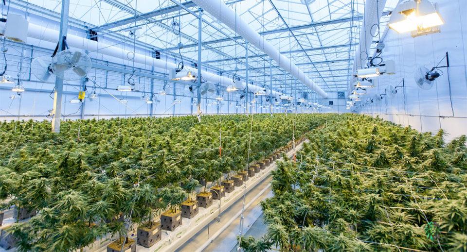 cannabis grow house operations