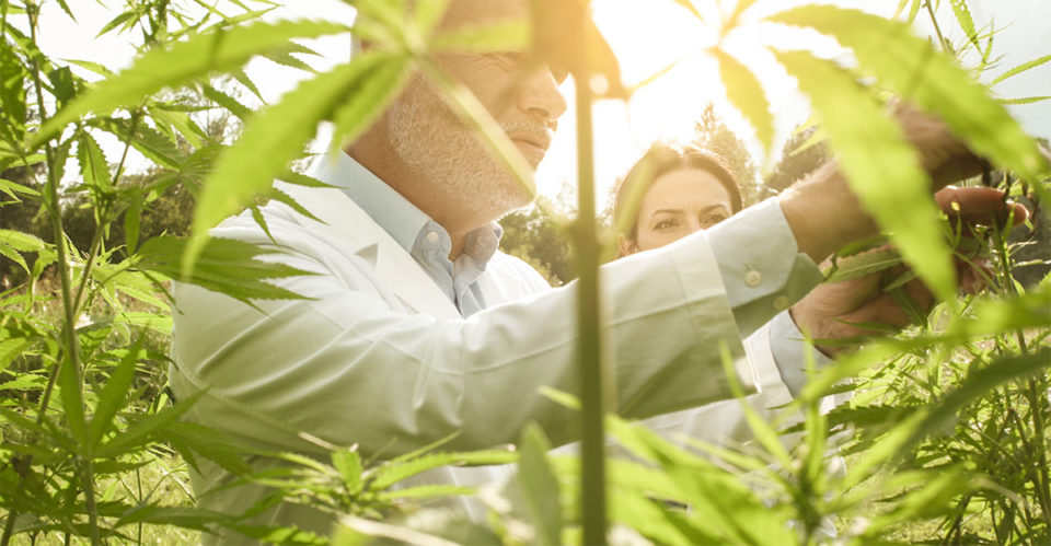 cannabis operational expertise